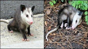 Animali che si fingono morti e altri inganni e bugie