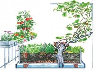 Permacultura: come progettare un orto su terrazze e balconi