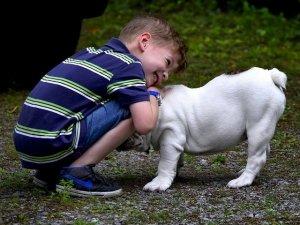 Pet Therapy: come si svolge?