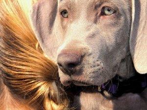 Pet Therapy: lavoro sostenibile?