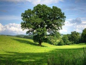 La quercia pappamolle e il faggio antisociale
