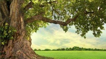 Perché si regala l'albero della vita? Simbologia dell'albero