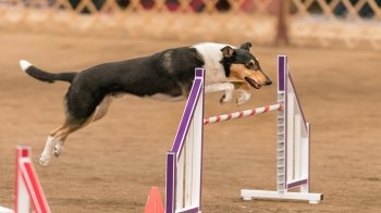 Sport cinofili: quali sono e come allenarsi