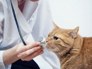 Veterinaria: un cambiamento di rotta è necessario