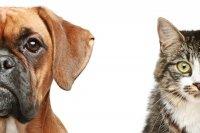 I consigli Macro per vivere assieme ai nostri amici animali
