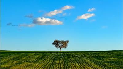 Alcuni alberi hanno