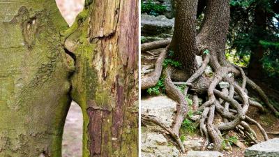 Gli alberi amano per sempre