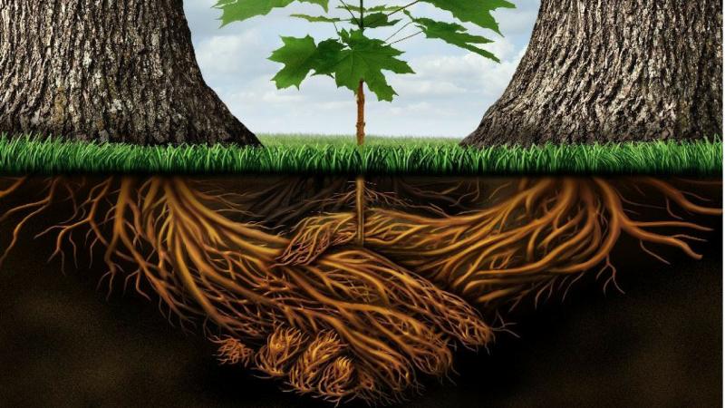 Gli alberi stringono amicizia