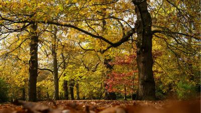 Esiste un galateo della foresta