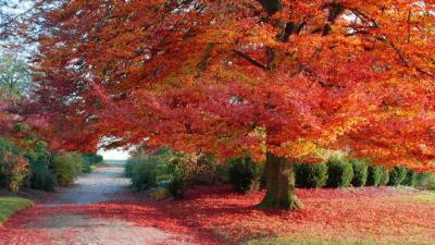 Gli alberi prendono decisioni