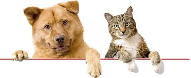 benessere animali