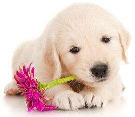 cane fiori