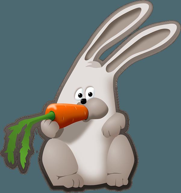 coniglio-domestico