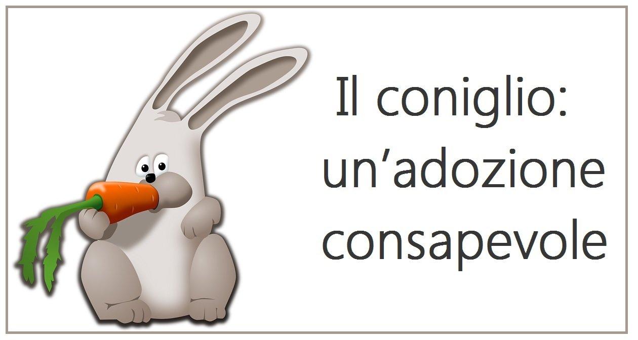 il coniglio un'adozione consapevole