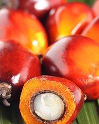 olio di palma rasio
