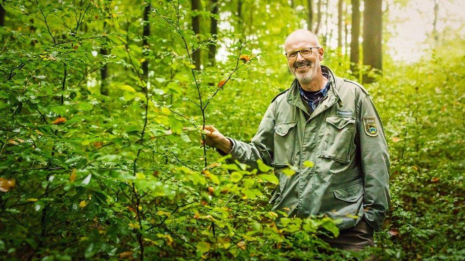 Peter Wohlleben nel bosco