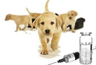 vaccini per animali